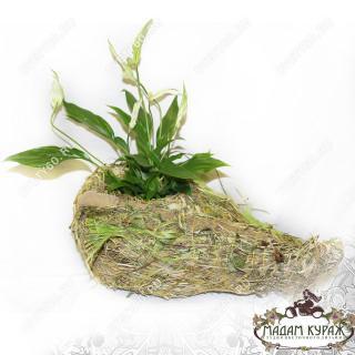 Оформление горшечного цветка в Пскове