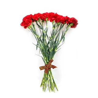 Красные гвоздики в Пскове