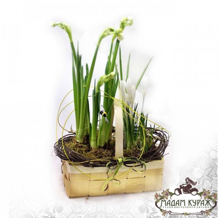 Весенние луковичные растения - крокусы и нарциссы в корзинке Псков