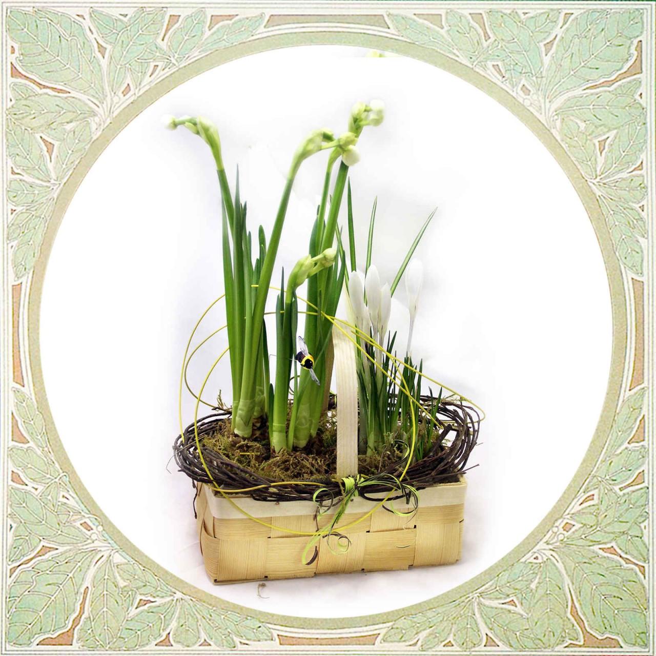 Весенние луковичные растения - крокусы и нарциссы в корзинке Псков  Открытка