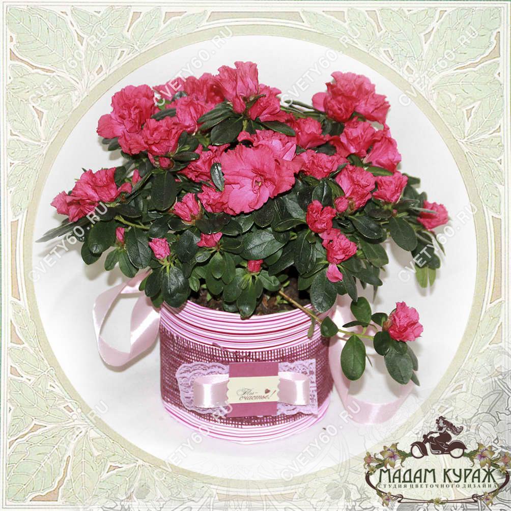 Цветущие комнатные растения в подарок в Пскове Открытка
